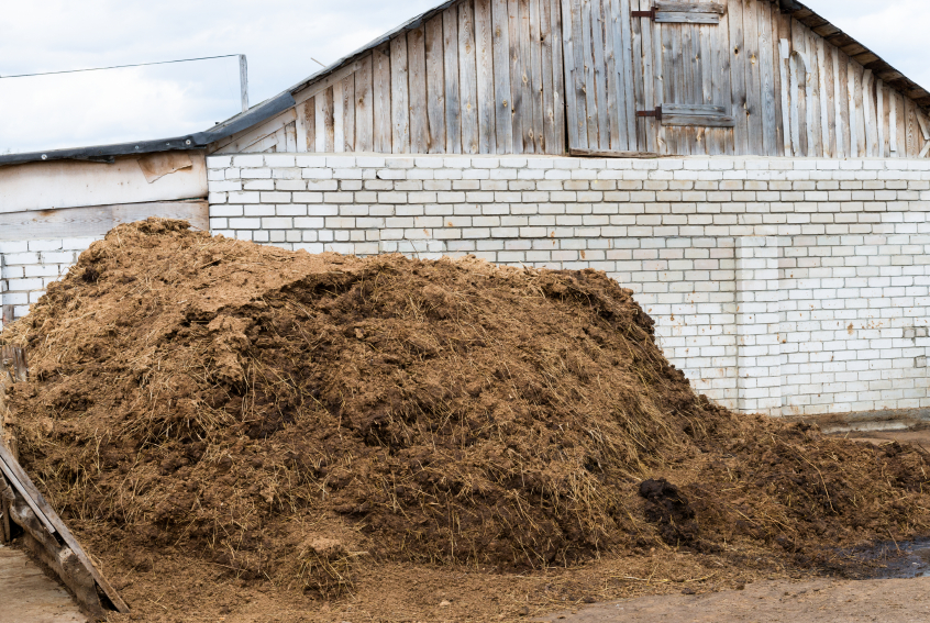 Pile of cow manure in front of a barn