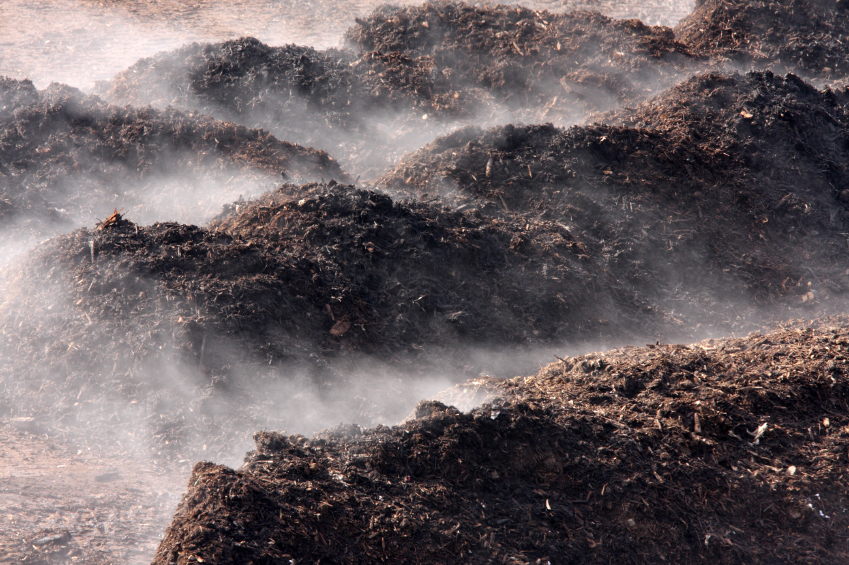 Large piles of steaming (hot) compost