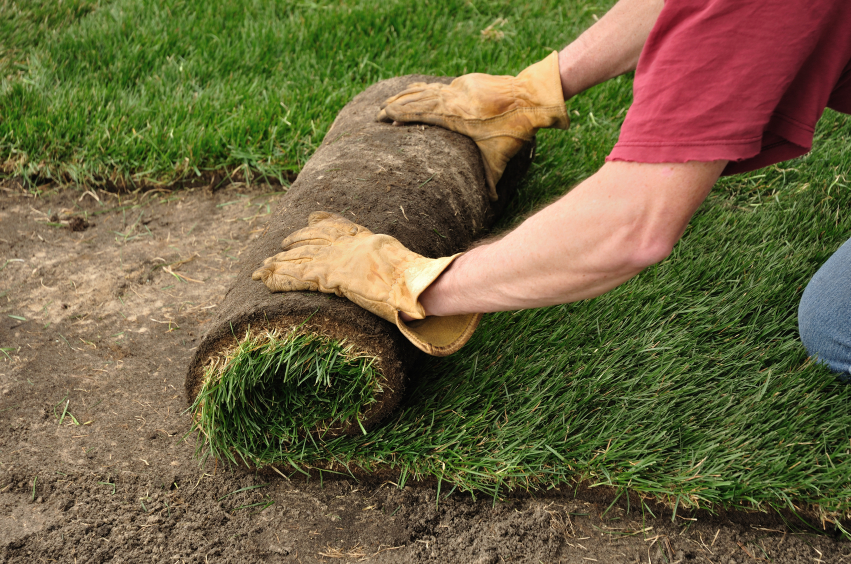 Person rolling out fresh sod to create a lawn