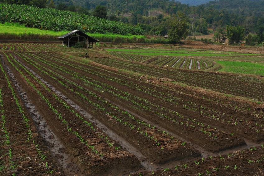 Vegetable crop fields on a farm