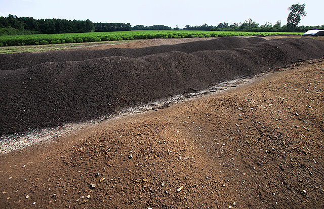 Compost piles should be 6 to 10 feet wide, 6 feet high, and as long as your space allows